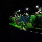 Planted Tropical Amazon Aquarium