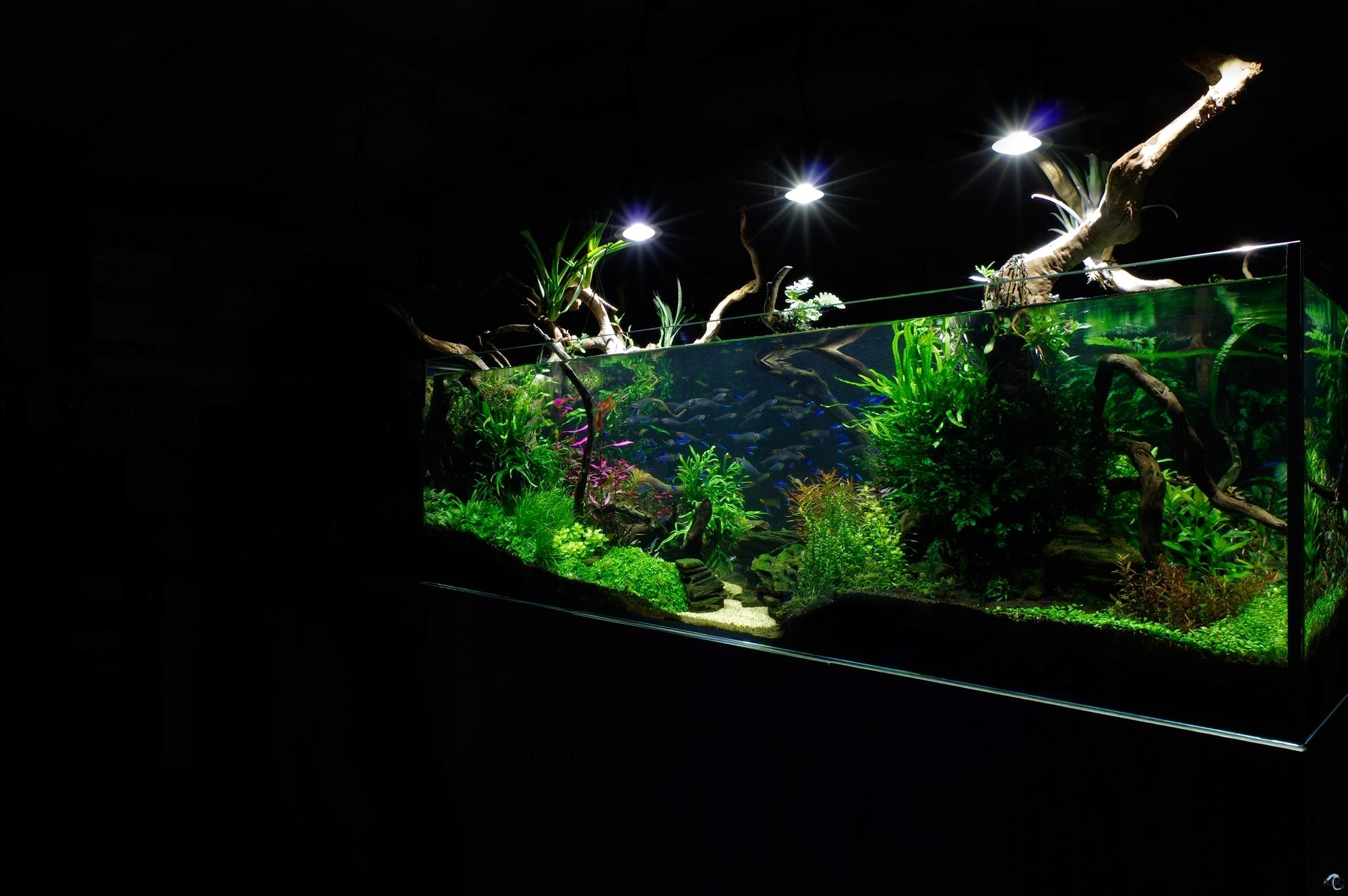 aquatic design centre. Black Bedroom Furniture Sets. Home Design Ideas