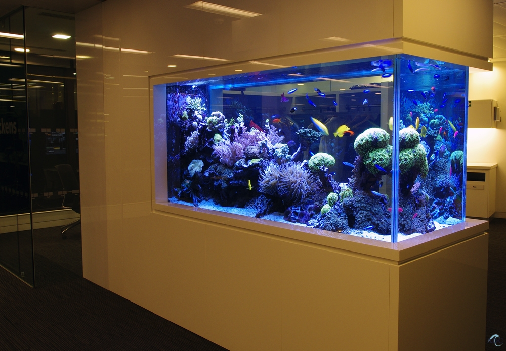 aquarium design colonne aquarium ground aquarium of hygiene and aquarium design society of. Black Bedroom Furniture Sets. Home Design Ideas