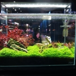 ADA-Planted-Aquarium-Aquatic-Design-Centre