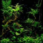 Planted Aquarium Fish Tank 002