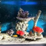 Restaurant Bar Aquarium