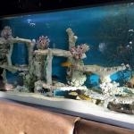 Restaurant and Bar Aquarium