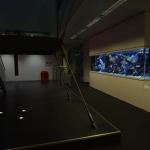 Bespoke Design Aquarium