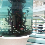 Circle or cylindrical aquarium