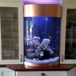 fish-tank-aquatic-design-curve-aquarium