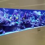 Marine Reef Aquarium 846