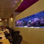 free standing office marine coral reef aquarium