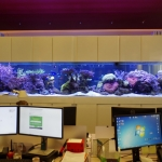 Bespoke Office Aquarium Installation