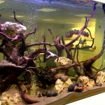Piranha Aquarium 003