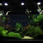 Amazonian Planted Freshwater Fishtank