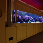 Large Coral Reef Aquarium