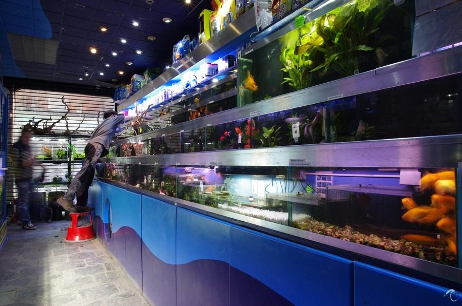 London aquarium supplies livestock aquatic design for Salt water fish stores