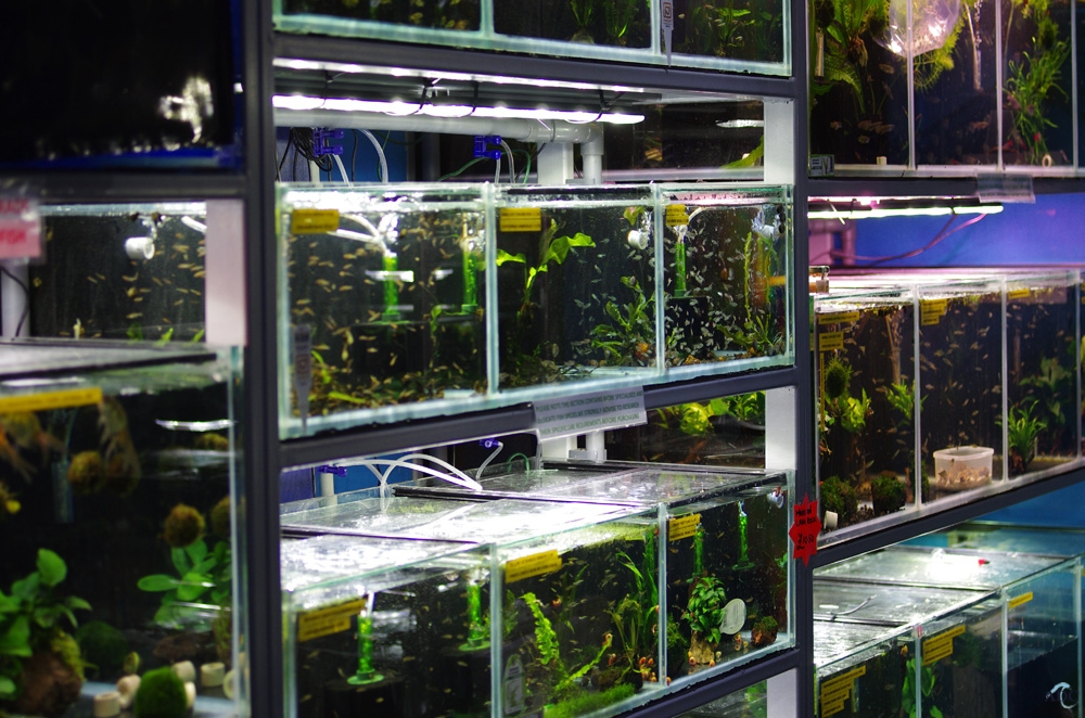London aquatic shop for aquariums fish tanks marine for Fish aquarium stores