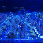 Coral Frags Shop