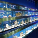 London retail shop aquarium fish supplies