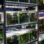 London retail shop aquarium fish supplies
