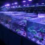 Marine corals London retail shop aquarium fish supplies