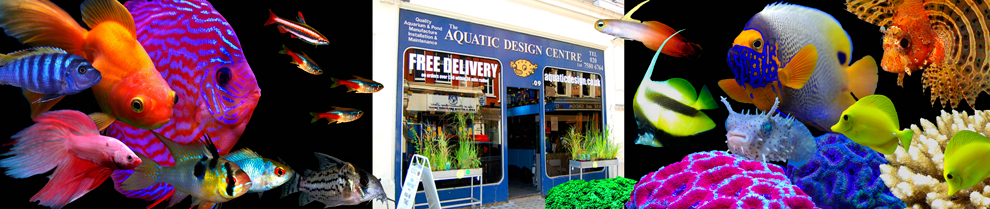 aquarium custom design, London