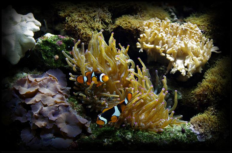 Colourful Coral Reef Aquariums