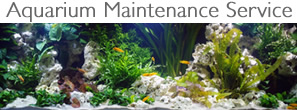 london-aquarium-maintenance-service
