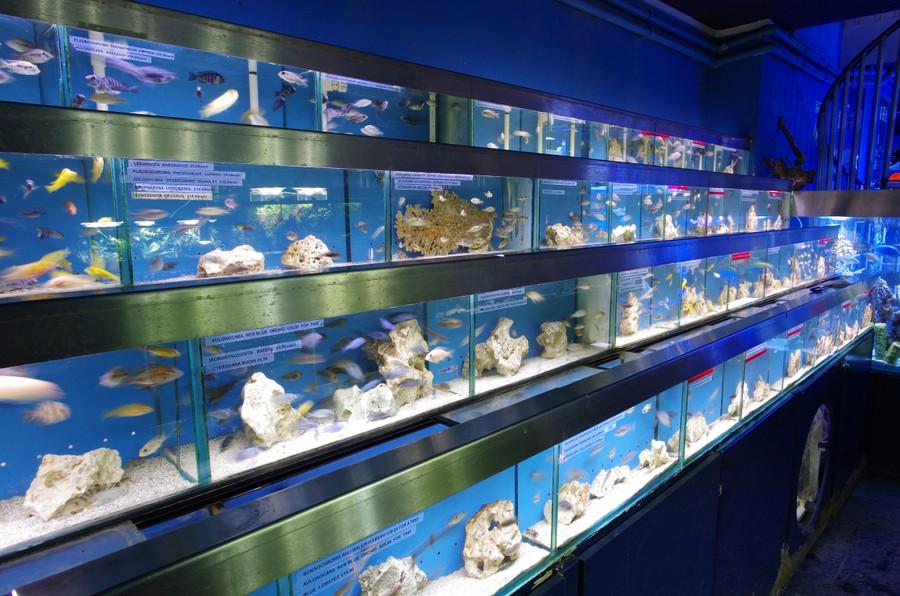 Visit Our London Shop For Aquariums Fish Tanks Marine