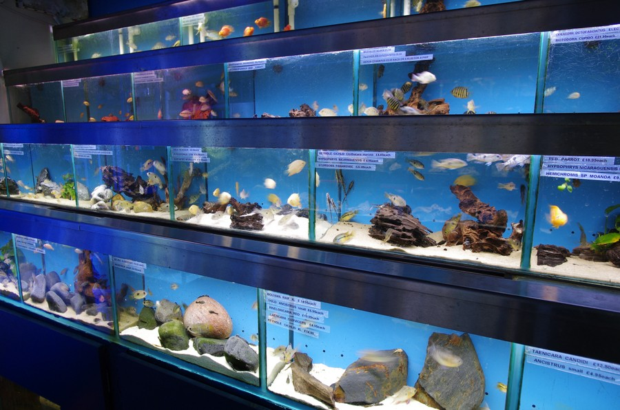 Visit our london shop for aquariums fish tanks marine for Salt water fish store
