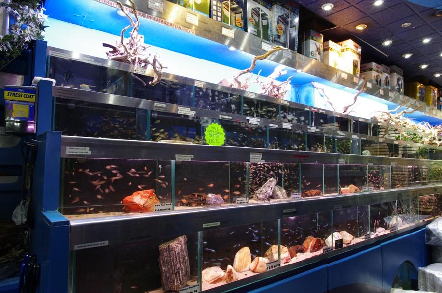 Freshwater Fish Store Aquarium Fish Store Freshwater Fish Cichlid Fish 2017 Fish Tank