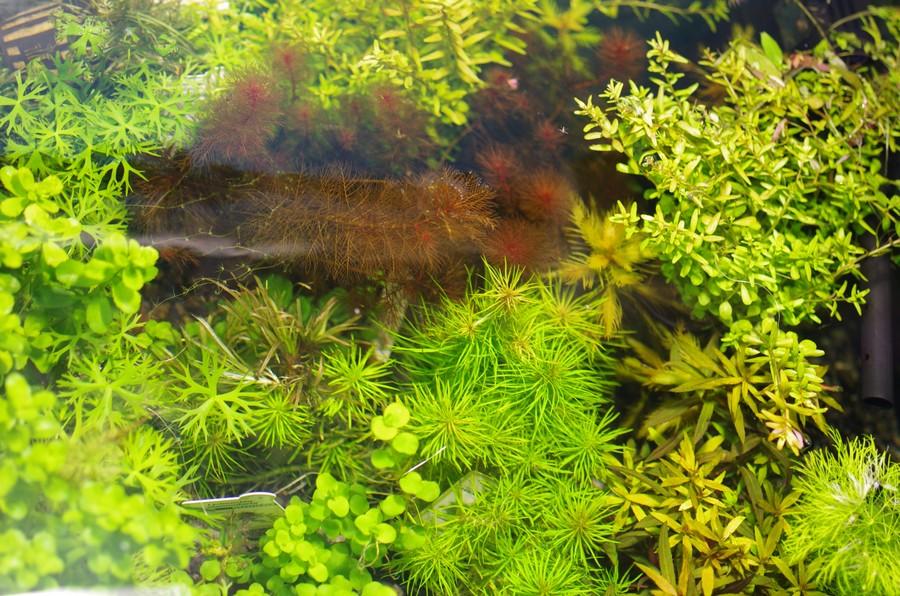 aquarium-plants_001