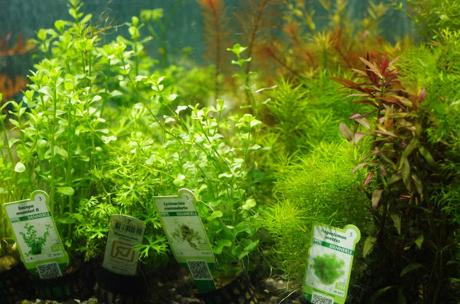 aquaruim-plants_002