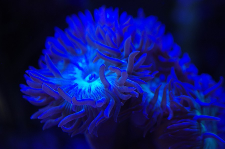 coral_001