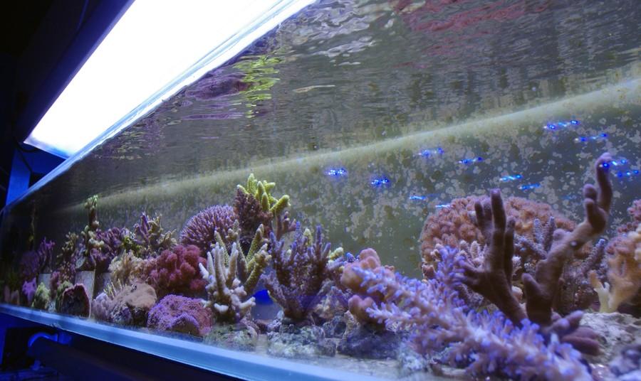 shop for Aquariums / Fish Tanks, Marine, Tropical, Freshwater, Coral ...