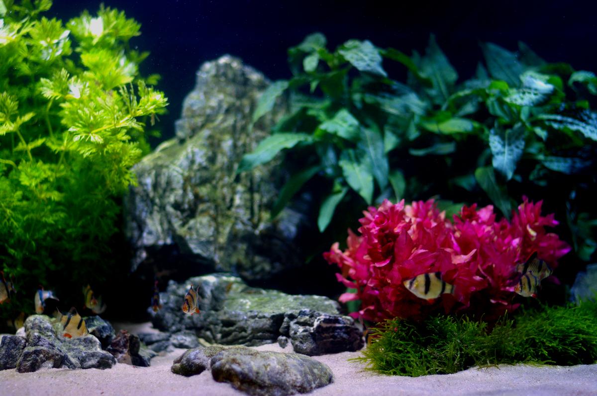 Community Aquarium