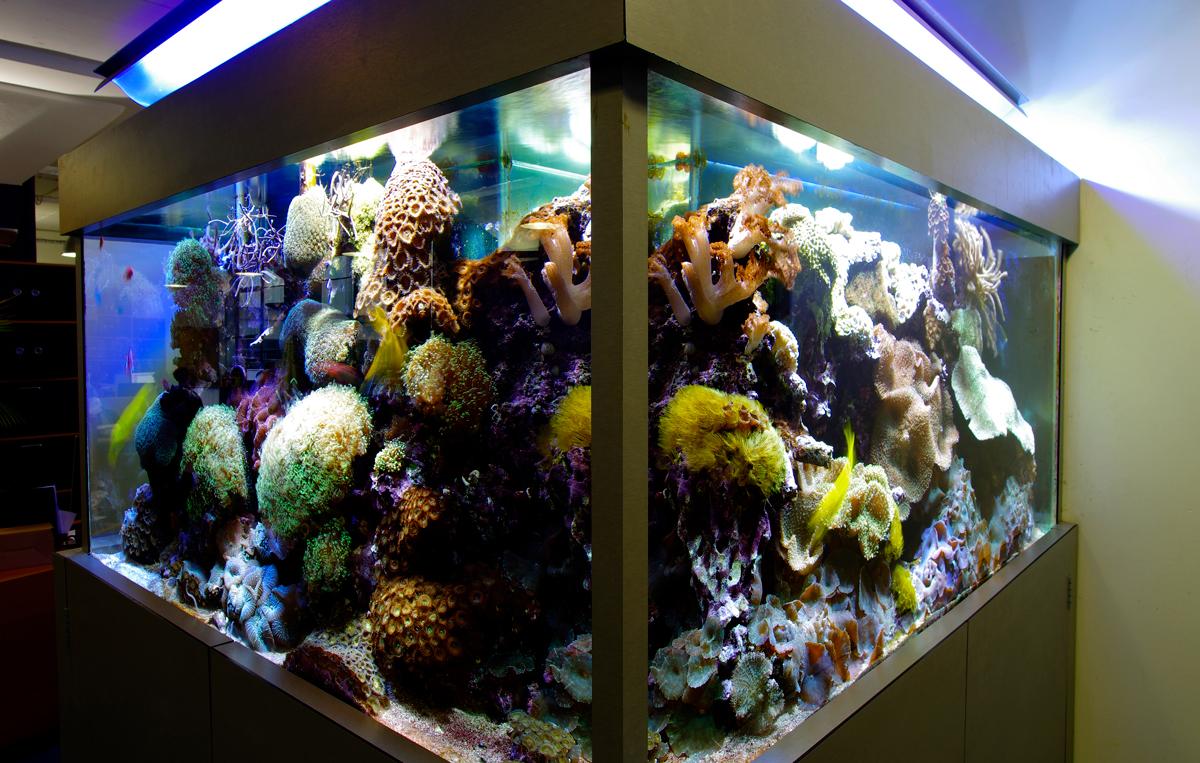 Aquarium store uk visit our london shop for aquariums for Freshwater fish stores