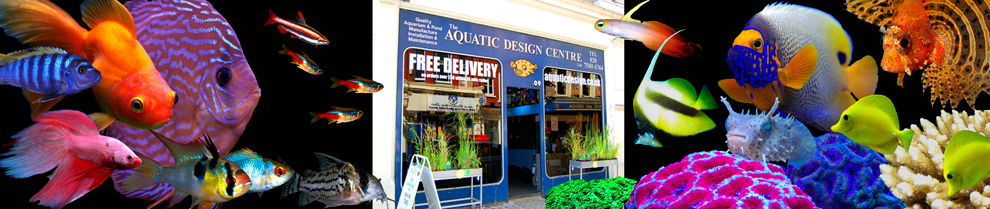 aquarium shop london