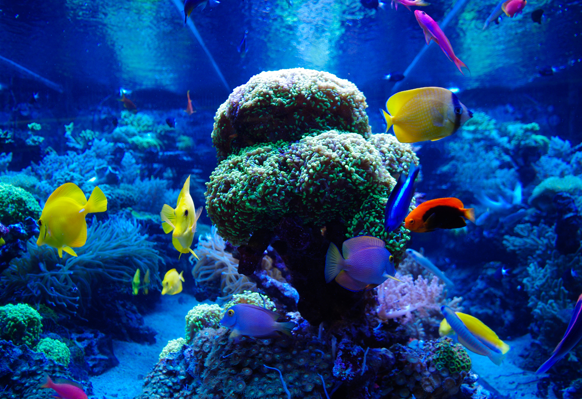 Colourful Fish and Corals