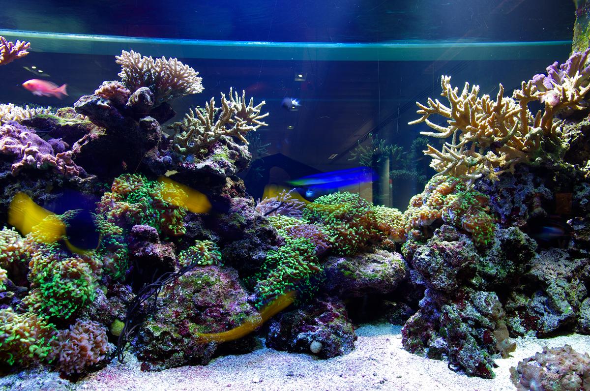 Aquatic design centre world leader in aquatic design for Design aquarium