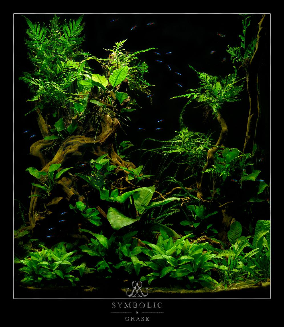 Planted Aqurium
