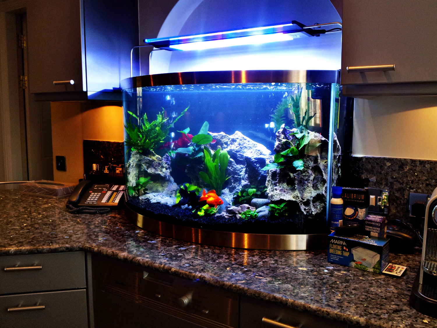 Freshwater fish tank upkeep - Freshwater Aquarium Design