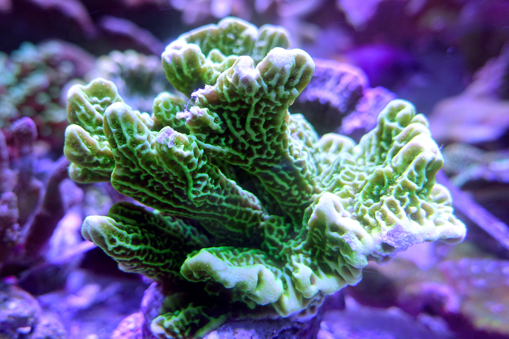 coral-frags-03731