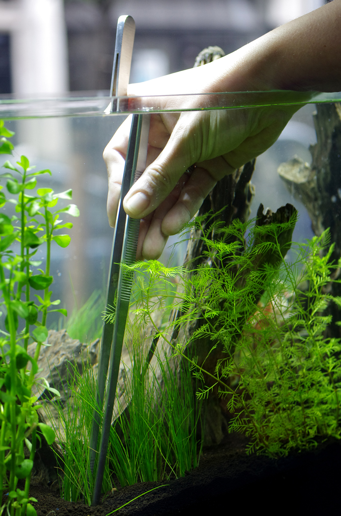 Aquarium / Fish Tank Maintenance