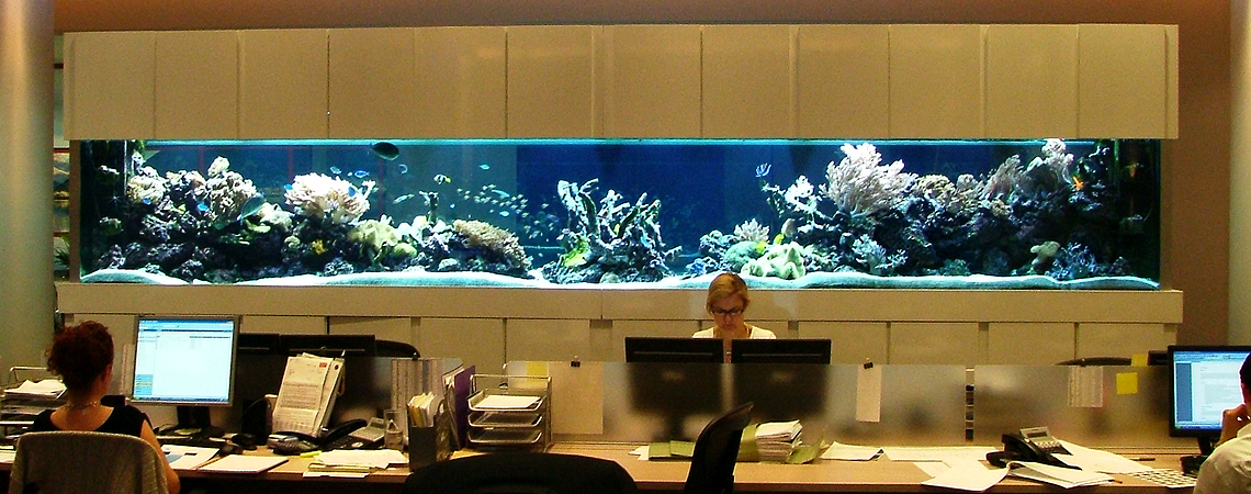 Aquarium Design, Manufacture, and Installations