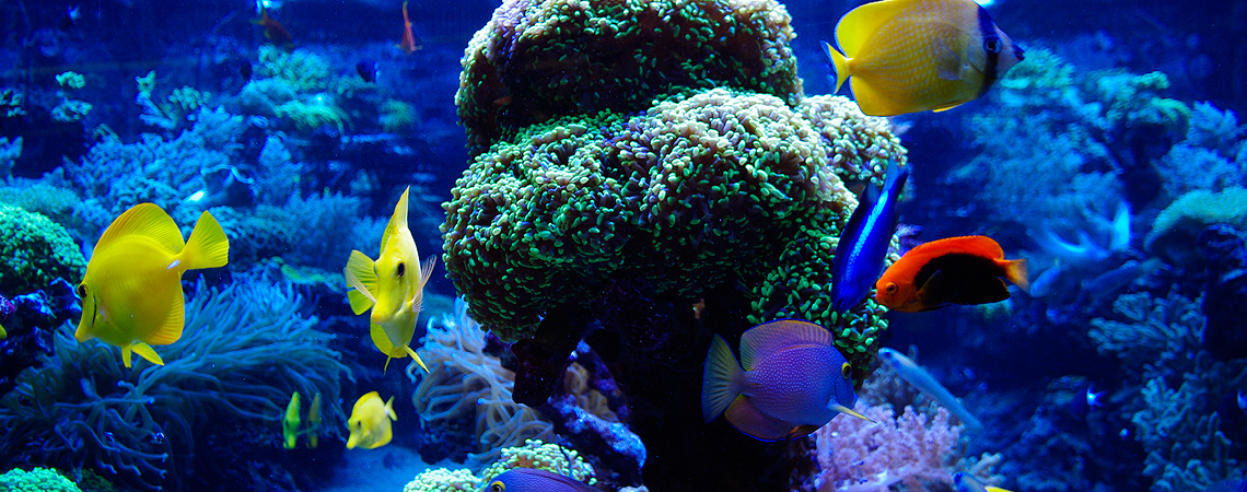 Aquarium Hire for Film, TV and Photography