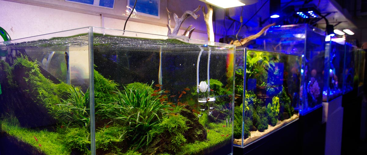 London Retail Store, Aquariums, Marine, Freshwater, Tropical, Accessories & Showroom