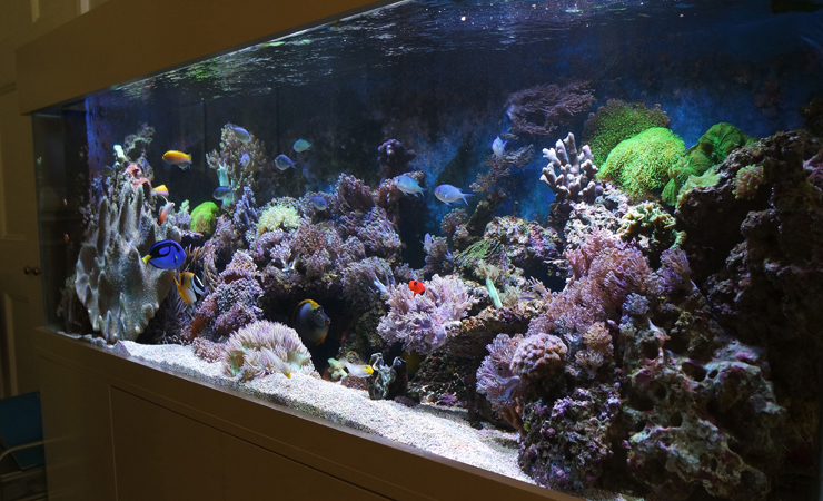 Living Coral Reefs in your home