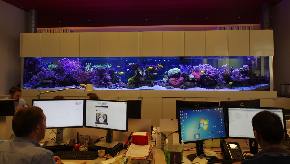 Office Coral Reef Tank