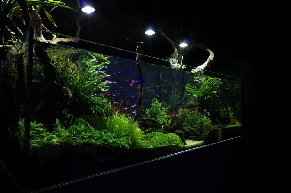 Tropical Planted Aquarium