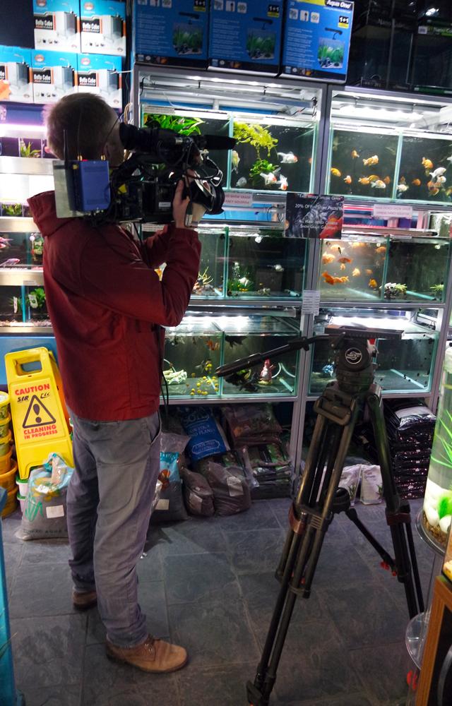 aquarium media services