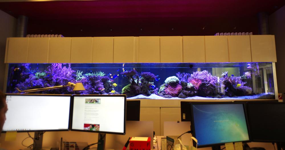 office bespoke aquarium