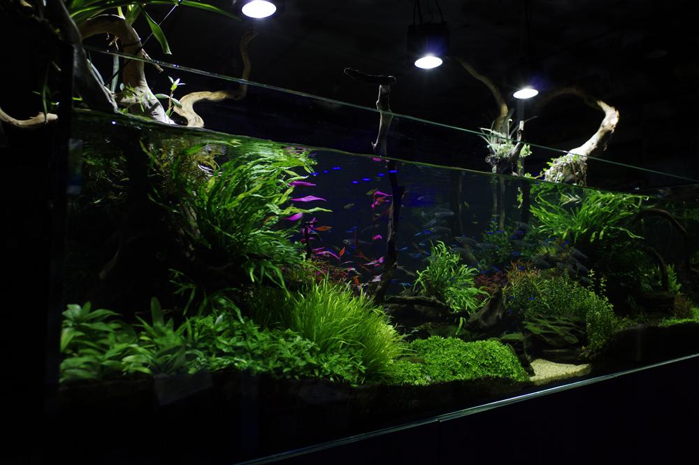 Designer Aquarium Installations